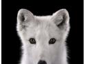 近距离拍野生动物特写:离群索居美感十足