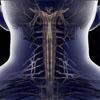 医学3D透视下的人体奇观