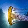 2012年度最佳水下摄影
