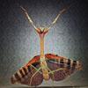 微距摄影拍摄令人惊异野生动物图片