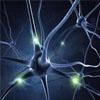 记录神经细胞信息 打开神经系统科学新纪元