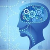 Science:第一个不同的脑神经元大规模转录组完成