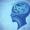 最新版精准大脑皮层地图亮相Nature,竟分180个区