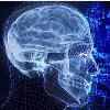 高智商者可自我协调大脑网络 让大脑连接更高效