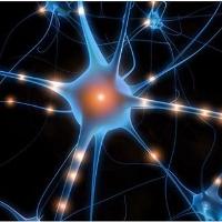 类神经突触晶体管和忆阻器研究中取得进展