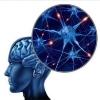 从ReLU到Sinc,26种神经网络激活函数可视化